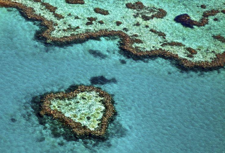 Grande barrière de corail - Queensland - Australie