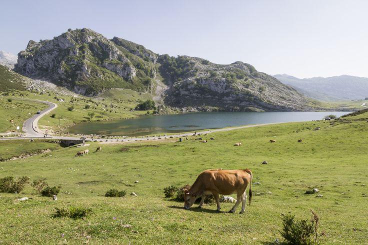 Parc national des Picos de Europa - Asturies - Espagne